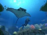 Zwem op je gemak door de oceaan in deze rustige, relaxte game