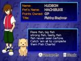 Vissen is toch altijd wel eenzaam, leuk dat de hond er dan ook bij zit!