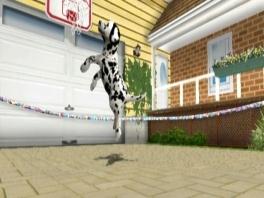 Dat hondje kan hoog springen!