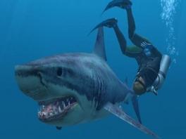 Speel met haaien en dolfijnen