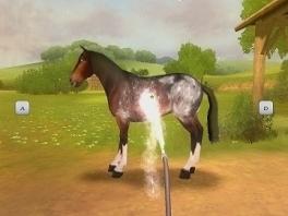 Eerst bewerk ik het paard met een hogedrukspuit, en dan krabben we de ijzel eraf!