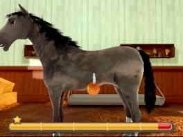 Verzorg je paard!