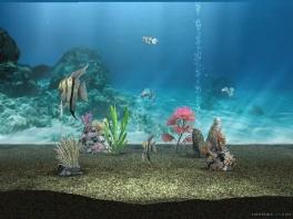 Je kan allerlei objecten in de aquarium plaatsen, zoals rotsen, mini bomen en zelfs bubbels!