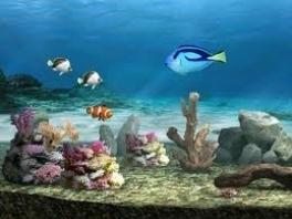 Oké, dat Nemo erin zit kan ik nog begrijpen, maar Dory?!?