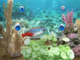 Dit zijn een van mijn liefelings vissen, genaamD de Neon Tetra.