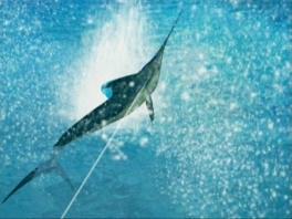 Maar de vissen laten zich niet zomaar vangen!