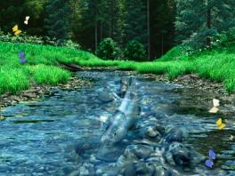 Dat water is minder diep dan de vis zelf...