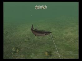 Sla zoveel mogelijk vissen aan de haak, en zorg dat ze ook niet meer ontsnappen!
