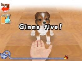 Leer je hondje een paar leuke trucs!